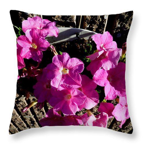 Pink Flowers Throw Pillow featuring the photograph Surprise Find by Baato