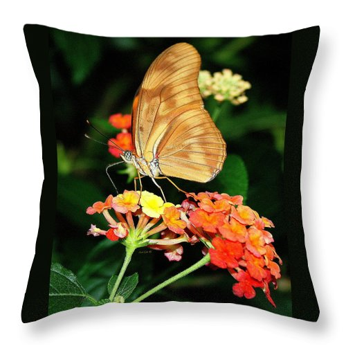 Butterfly Throw Pillow featuring the photograph Surprise by Linda Galok