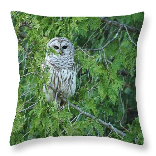 Barred Owl Throw Pillow featuring the photograph Surprise Visitor by Teresa McGill
