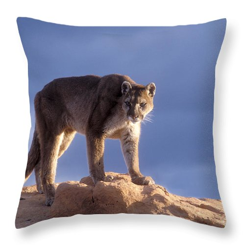 Cougar Throw Pillow featuring the photograph Surveying The Territory by Sandra Bronstein