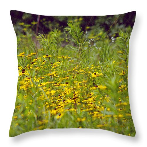 Nature Throw Pillow featuring the photograph Susans In A Green Field by Randy Oberg