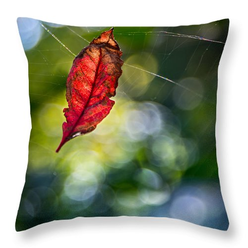 Fall Throw Pillow featuring the photograph Suspended by Michael Arend