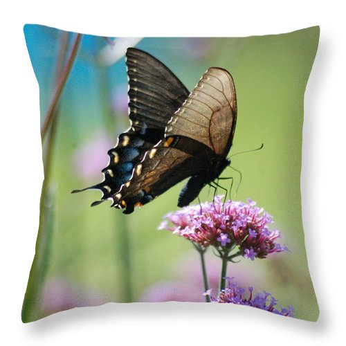 Nature Throw Pillow featuring the photograph Swallowtail Butterfly  by D Nigon