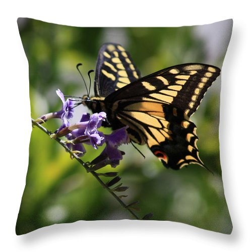 Swallowtail Butterfly Throw Pillow featuring the photograph Swallowtail Butterfly 1 by Carol Groenen