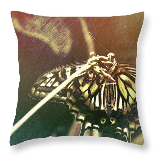 Butterfly Throw Pillow featuring the photograph Swallowtail by JAMART Photography