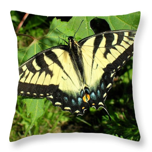 Swallowtail Throw Pillow featuring the photograph Swallowtail by Peggy King