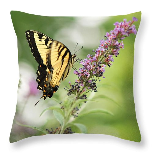 Swallowtail Butterfly Throw Pillow featuring the photograph Swallowtail Stance by Michelle DiGuardi