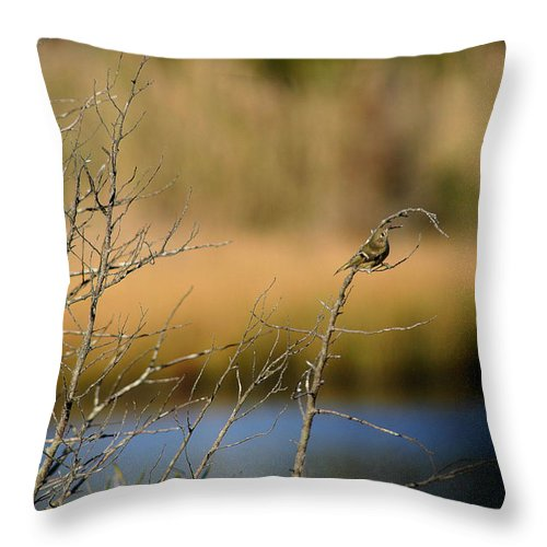 Sparrow Throw Pillow featuring the photograph Swamp Sparrow by Mary Haber