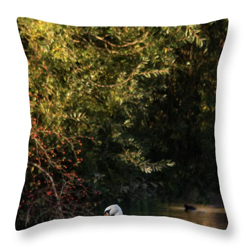 Swan Throw Pillow featuring the photograph Swan by Cliff Norton