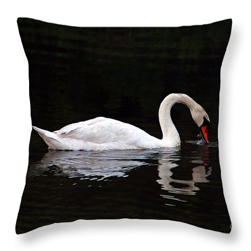 Clay Throw Pillow featuring the photograph Swan Drinking by Clayton Bruster