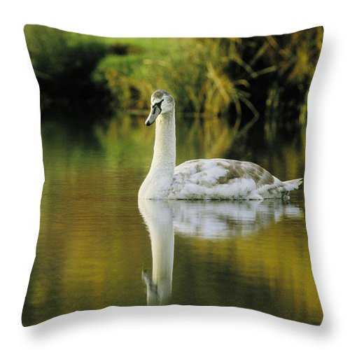 Swan Throw Pillow featuring the photograph Swan Reflection by Steve Somerville