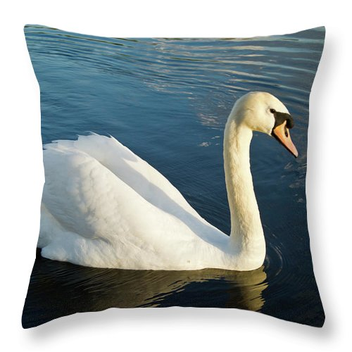 Cygnus Throw Pillow featuring the photograph Swan Strutting by Douglas Barnett