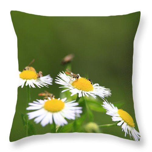 Bee Throw Pillow featuring the photograph Sweat Bee by Rick Morgan
