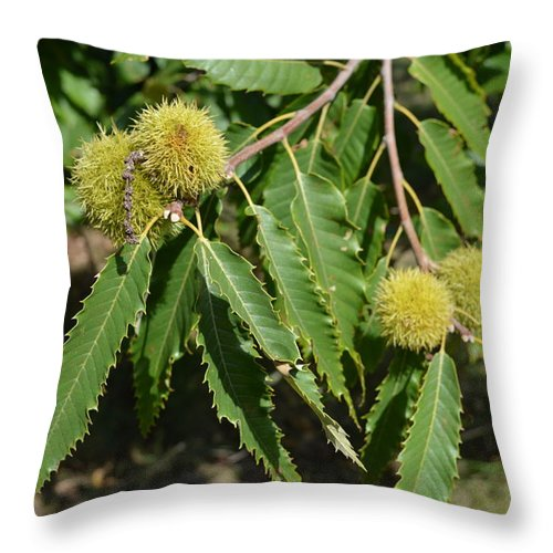 Sweet Chestnuts Throw Pillow featuring the photograph Sweet Chestnuts by David Dand