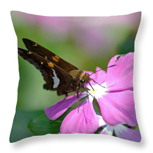 Flower Throw Pillow featuring the photograph Sweet Desert by Donna Bentley