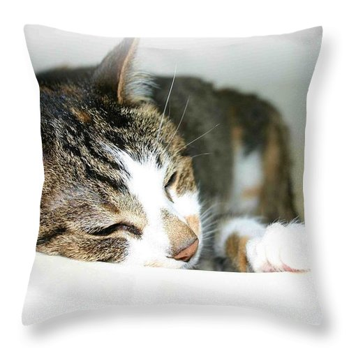 Cat Throw Pillow featuring the photograph Sweet Dreams by Nelson Strong