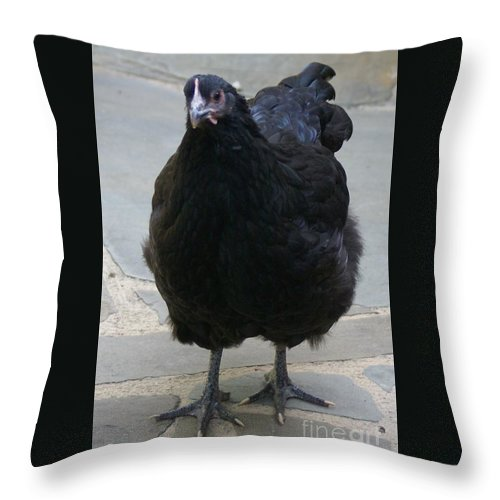 Chicken Throw Pillow featuring the photograph Sweet Eggbert by Kathryn Launey