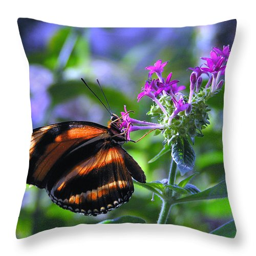 Butterfly Throw Pillow featuring the photograph Sweet Nector by Louise Magno