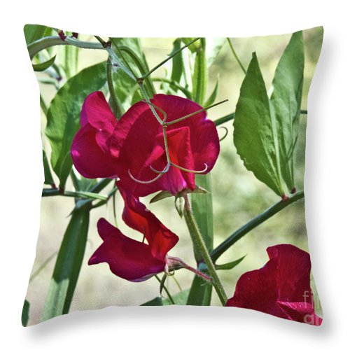 Boyce Thompson Arborretum Throw Pillow featuring the photograph Sweet Peas In The Shade by Kathy McClure