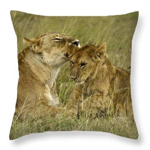 Africa Throw Pillow featuring the photograph Sweet Thing by Michele Burgess