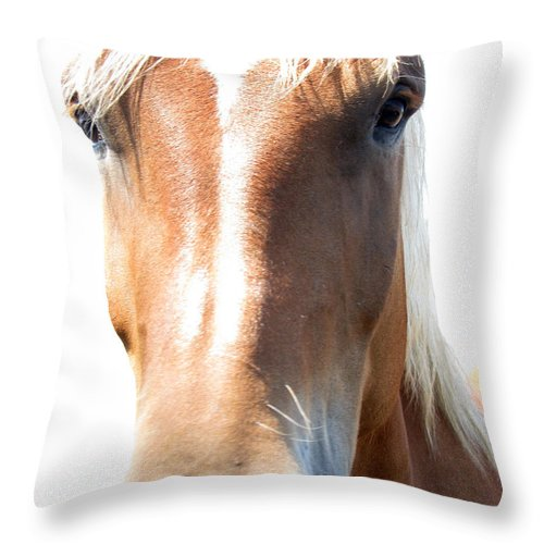 Horse Throw Pillow featuring the photograph Sweetie by Amanda Barcon