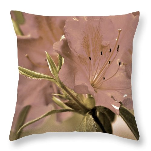 Azaleas Throw Pillow featuring the photograph Sweetness by Donna Shahan