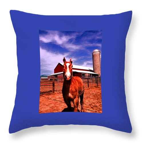 Amish Throw Pillow featuring the photograph Sweetness by Lori Faircloth