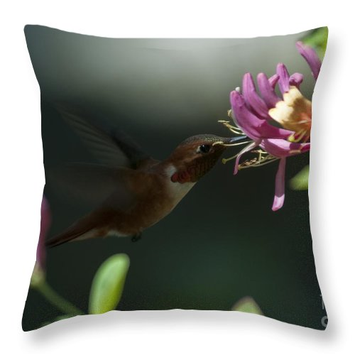 Hummingbird Throw Pillow featuring the photograph Sweetness by Rod Wiens