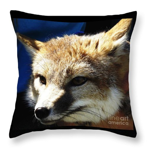 Foxes Throw Pillow featuring the photograph Swift Fox With Oil Painting Effect by Rose Santuci-Sofranko