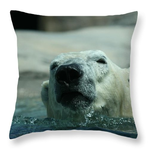 Polar Bear Throw Pillow featuring the photograph Swimming Is Serious Business by David Dunham