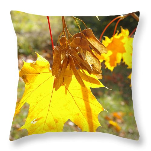Trees Throw Pillow featuring the photograph Sycamore Fruits by Veron Miller