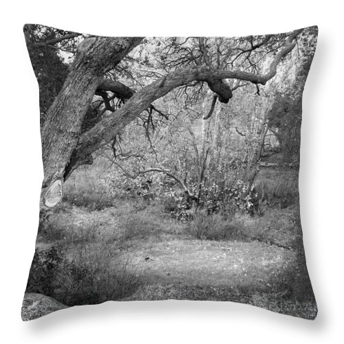 Landscape Throw Pillow featuring the photograph Sycamore Grove Black And White by Karen W Meyer