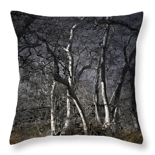 Landscape Throw Pillow featuring the photograph Sycamore Grove by Karen W Meyer