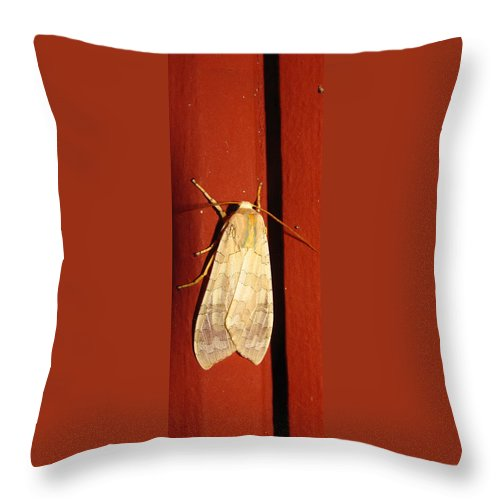 Maryland Sycamore Tussock Moth Images Pale Tiger Moth Images Sycamore Tussock Moth Photograph Prints Pale Tiger Moth Photograph Prints Entomology Nocturnal Forest Ecology Forest Habitat Ecosystem Biodiversity Nature Banded Tussock Moth Images Throw Pillow featuring the photograph Sycamore Tussock Moth by Joshua Bales