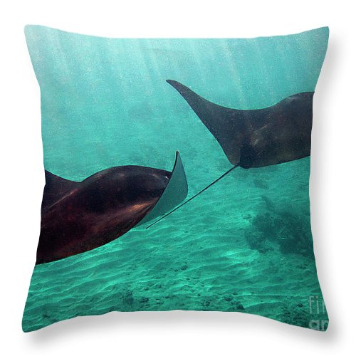 Manta Rays Throw Pillow featuring the photograph Synchronized Swimming by Bette Phelan