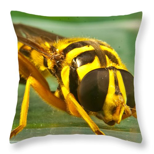 Syrphid Throw Pillow featuring the photograph Syrphid Eye To Eye by Douglas Barnett