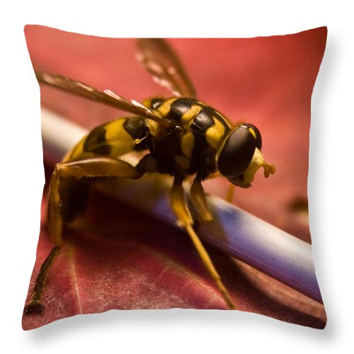 Insect Throw Pillow featuring the photograph Syrphid Fly Poised by Douglas Barnett