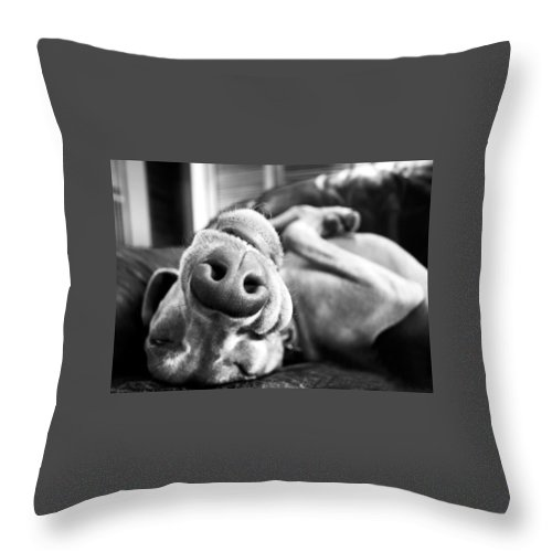 Dog Throw Pillow featuring the photograph T-rex by Guillermo Cummmings