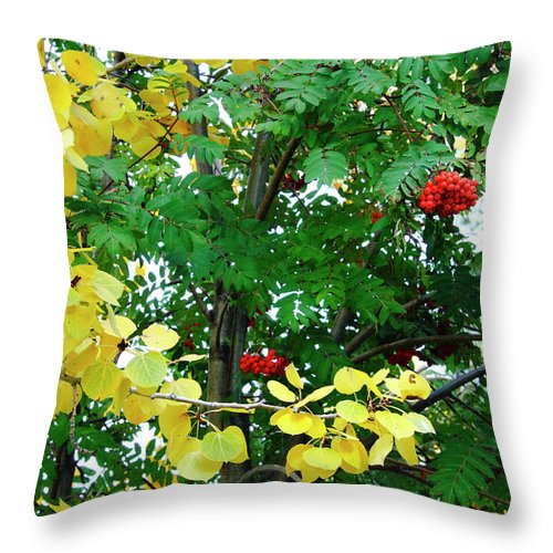Aspens Throw Pillow featuring the photograph Tahoe Fall Palette by Diane Zucker