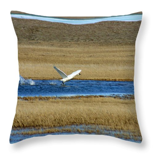 Swan Throw Pillow featuring the photograph Take Off by Anthony Jones