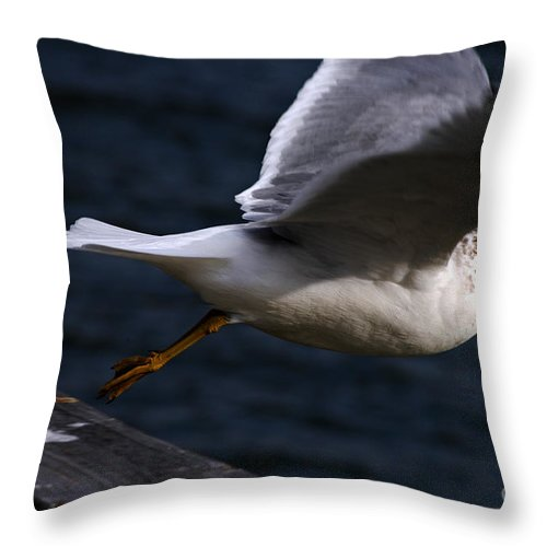 Clay Throw Pillow featuring the photograph Taking Flight by Clayton Bruster