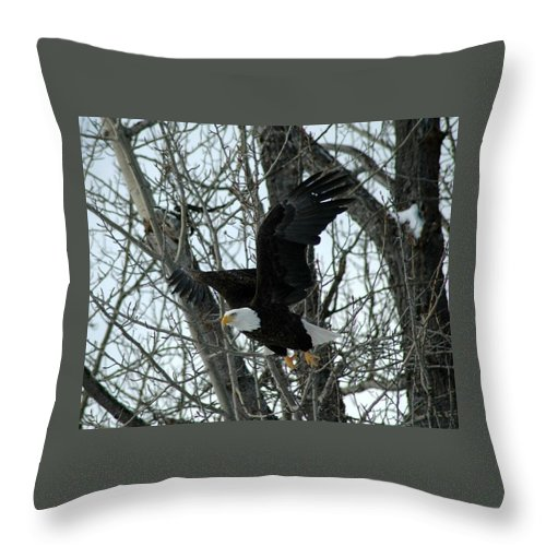 Eagle Throw Pillow featuring the photograph Taking Flight by Mary Sword