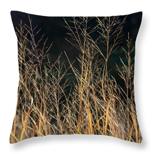 Throw Pillow featuring the photograph Tall Fall Grasses by Joni Fischenich