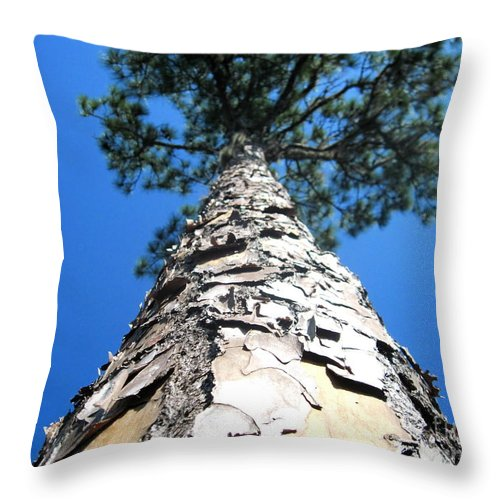 Pine Tree Throw Pillow featuring the photograph Tall Pine Tree In Summer by Camryn Zee Photography