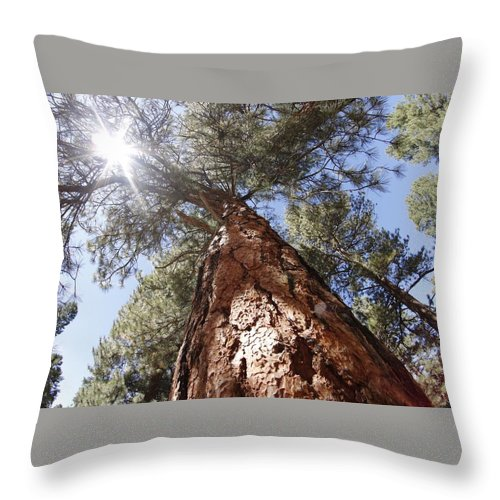 Sun Throw Pillow featuring the photograph Tall Tree. by Arturo Pena