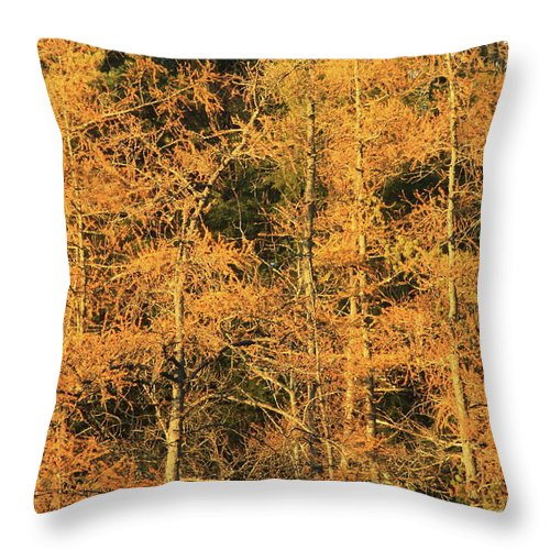 Forest Throw Pillow featuring the photograph Tamarack Foliage by John Burk