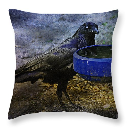 Crow Throw Pillow featuring the photograph Taming Of The Crow by Georgiana Romanovna