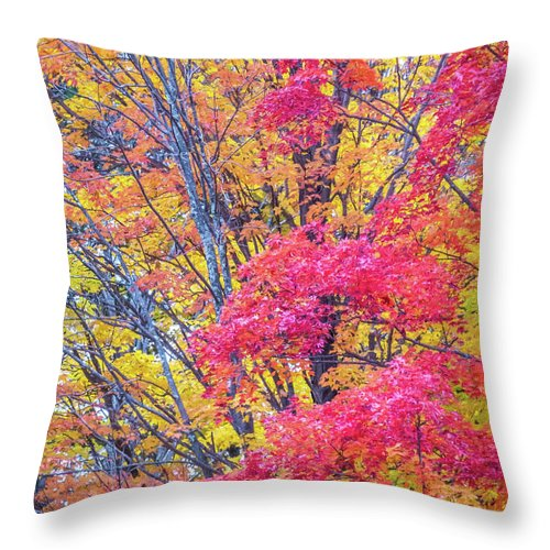 Fall Foliage Throw Pillow featuring the photograph Tangerine Tree by Diane Moore