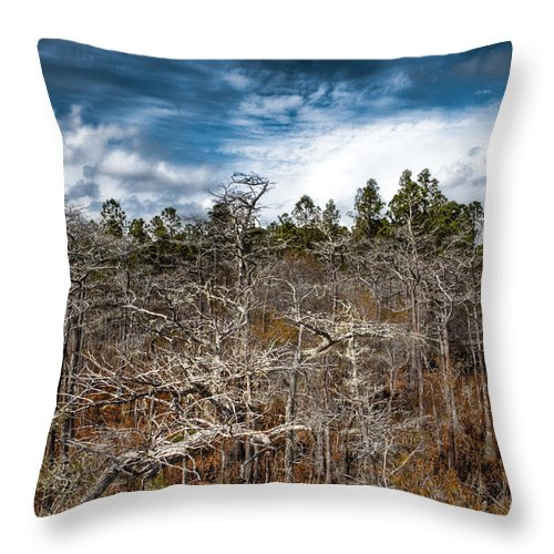 Landscapre Throw Pillow featuring the photograph Tate's Hell State Forest by Rich Leighton