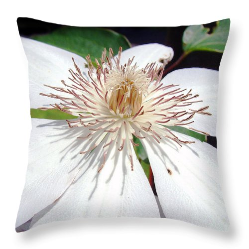 Clematis Throw Pillow featuring the photograph Tattered And Torn by RC DeWinter